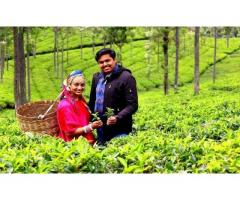 Book Your Budget Honeymoon Package and Enjoy the Maximum in God's Own Country