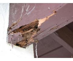 Zero Defect Termite control Biochem pest control Service in Trichy