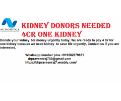make money with kidney