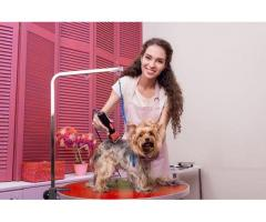 Professional Dog Grooming Training