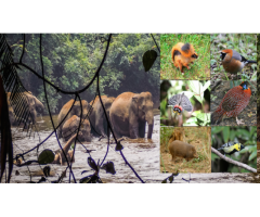 North East India Wildlife | Purvi Discovery