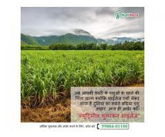 Sugarcane Silage Punjab
