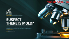 Mold Inspection & Testing Services in Washington, DC